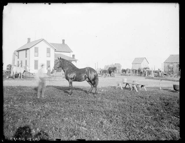 A. Fenstermacher's farm, Amherst, Buffalo County, Nebraska.