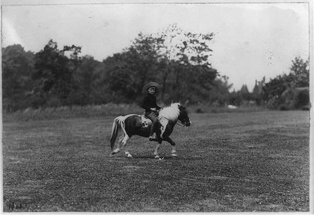[Archie Roosevelt riding pony]
