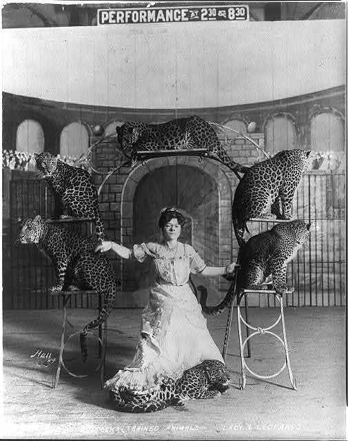 Bostock's trained animals -- Lady & leopards