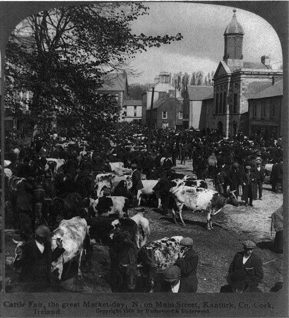 Cattle Fair, the great market day, N. on Main Street, Kanturk, County Cork, Ireland