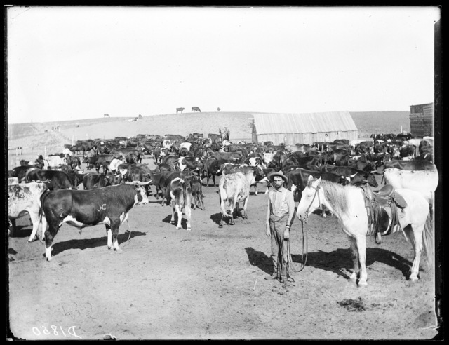 Charles Sanders on the old Milt Hannah ranch, northeast of Anselmo on the Middle Loup River, Custer County, Nebraska.