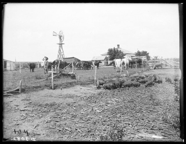 Edward Haase farm near Watertown, Dawson County, Nebraska.