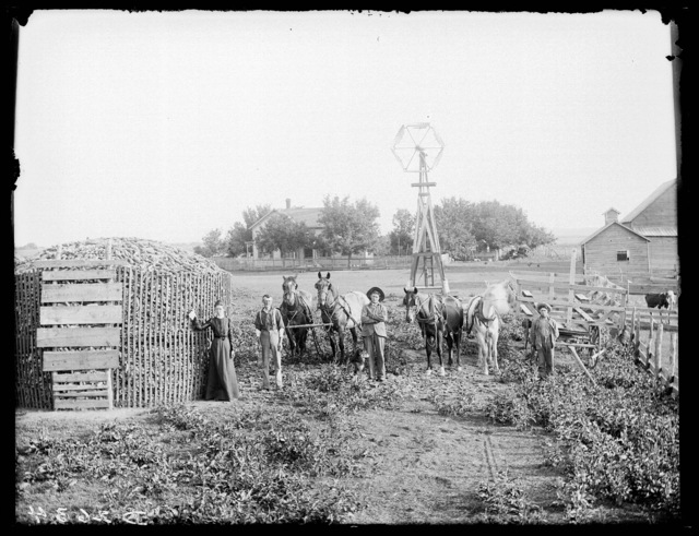 Family with the corn harvest.