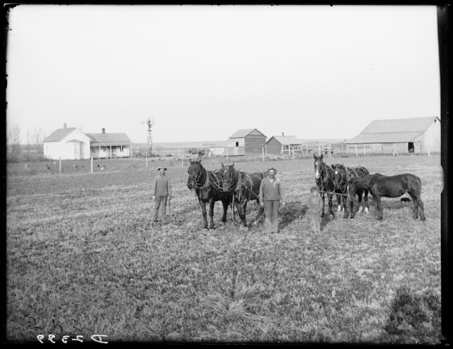 Farm home of Gus Sullwold, Elm Creek, Buffalo County, Nebraska.