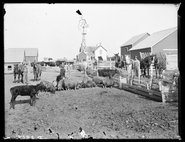 Farm scene, Buffalo County, Nebraska.