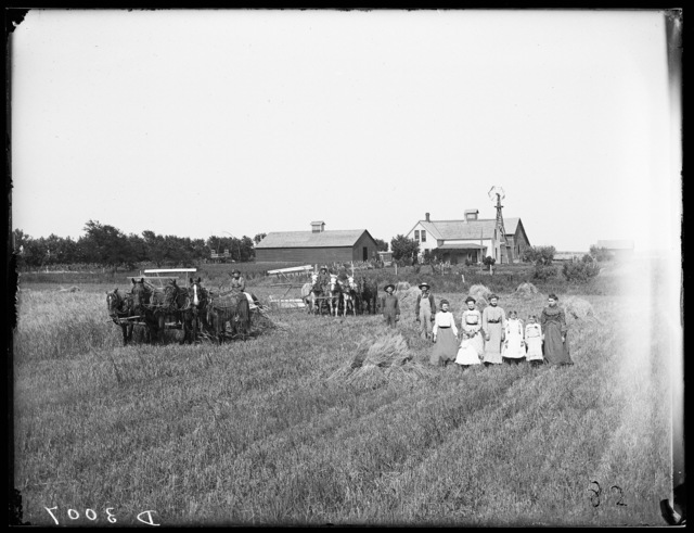 Harvesting wheat on the J.D. Lowenstein farm, Kearney, Buffalo County, Nebraska.