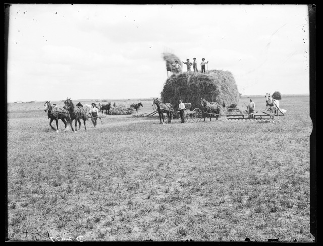 Haying on the Colson Ranch on the Wood River near Eddyville, Nebraska.