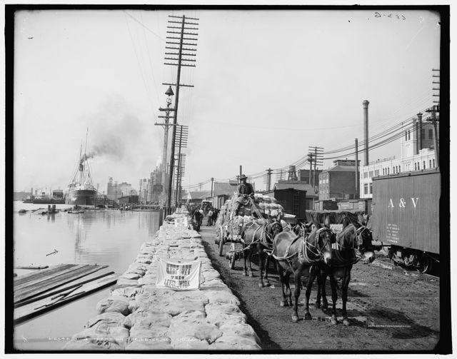 Mule teams on the levee, New Orleans, La.
