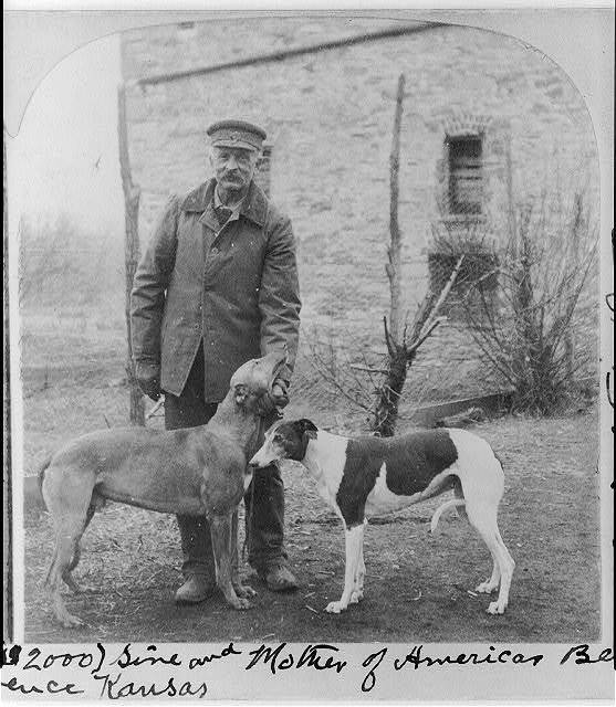 Northern Surprise and Jessamy, sire and mother of Americas' best coursing hounds. Lowes Kennels, Lawrence, Kansas