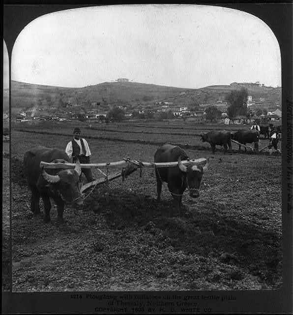 Ploughing with buffaloes on the great fertile plain of Thessaly, Northern Greece
