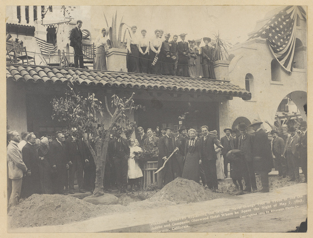 President Roosevelt re-planting the original navel orange tree in front of old Adobe and Campanile, at Glenwood Inn, Riverside, Cal., where he spent the night of May 7th, 1903