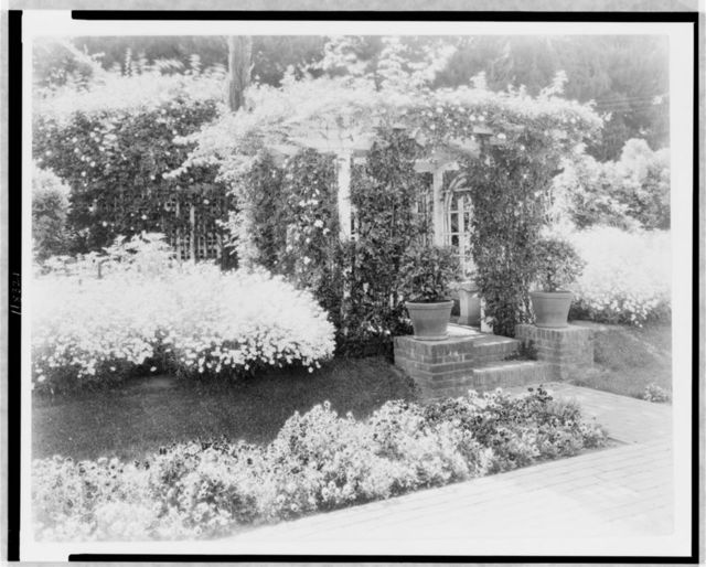 [Small arbor covered with roses, with daisies and pansies on banks, on estate of Mrs. Walter C. McKeon, Pasadena, California]