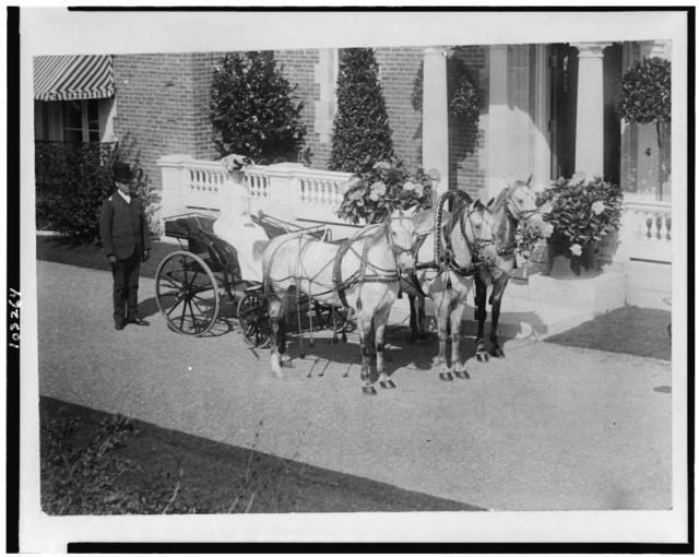 [Small carriage drawn by three horses] / photo by H.L. Bradley, Bar Harbor.