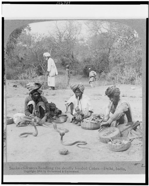 Snake charmers handling the deadly hooded cobra - Delhi, India