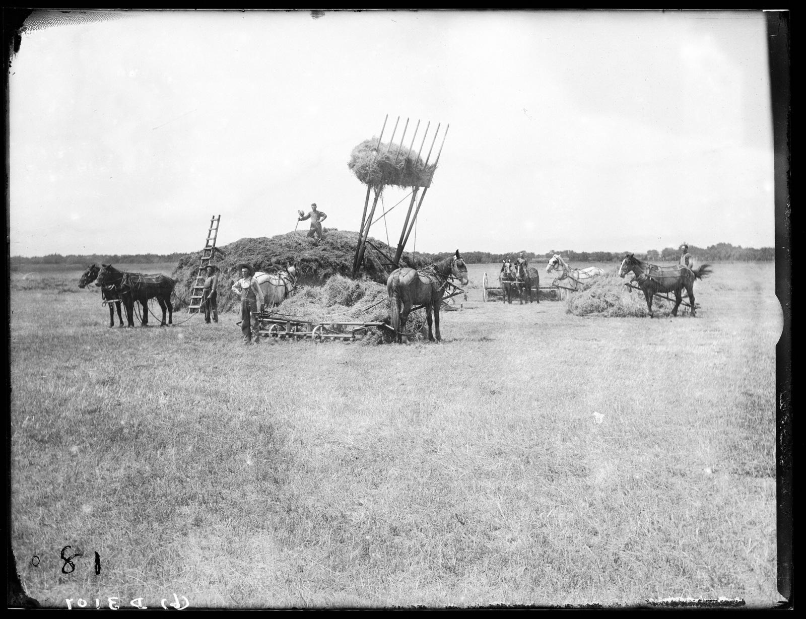 Stacking hay on farm of L.S. Deets near Kearney, Buffalo County, Nebraska