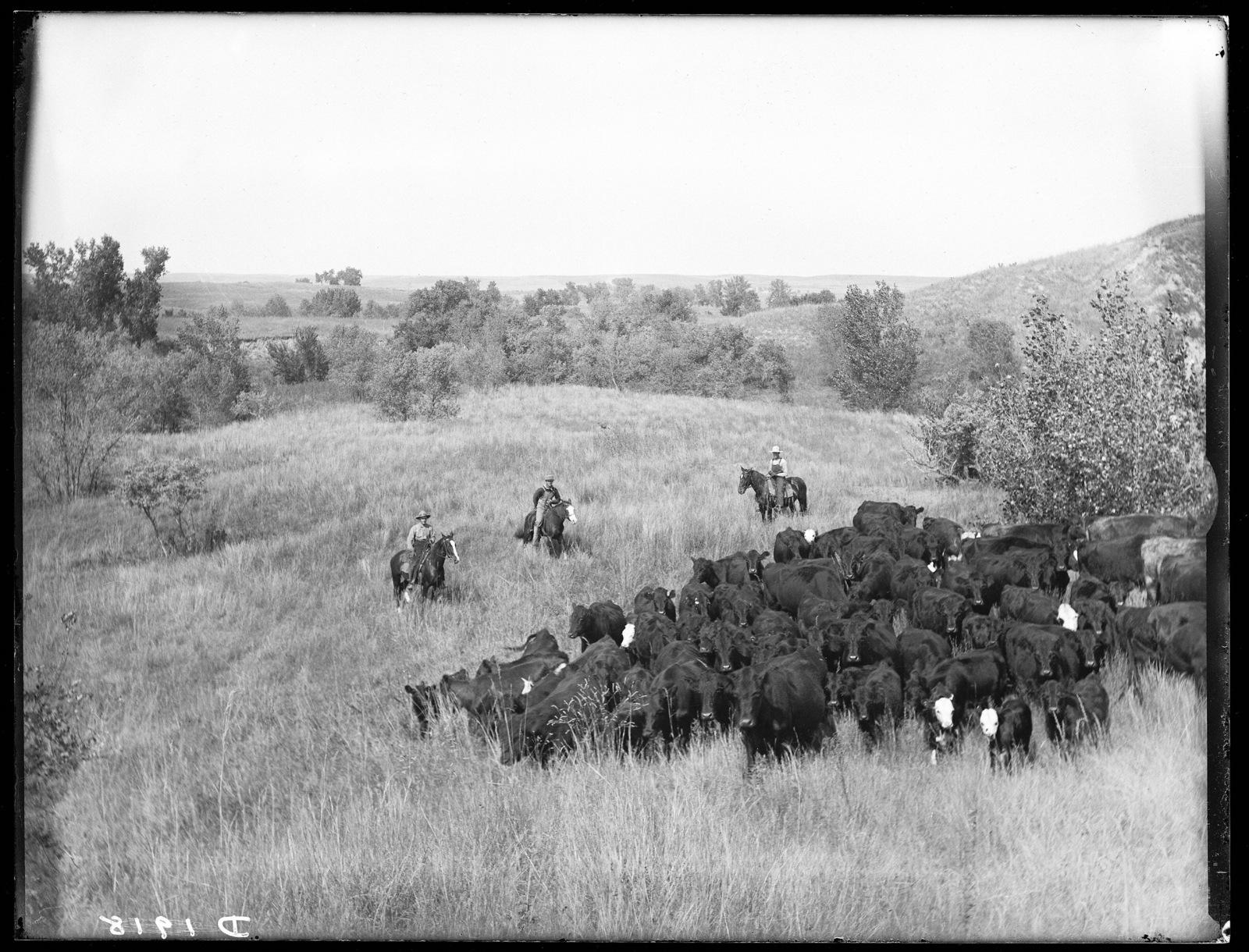 T. J. Parrish Ranch on the South Loup River, Buffalo County,  Nebraska.