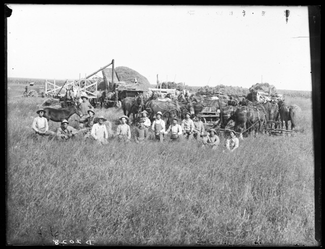 W.F. Kincade threshing with horse power near Amherst, Buffalo County,  Nebraska.