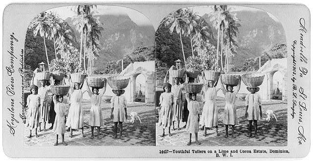 Youthful toilers [with baskets on heads] on a lime and cocoa estate, Dominica, B.W.I.