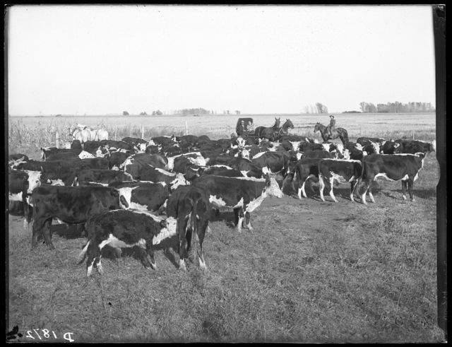 A.L. Milburn,  Overton, Nebraska.