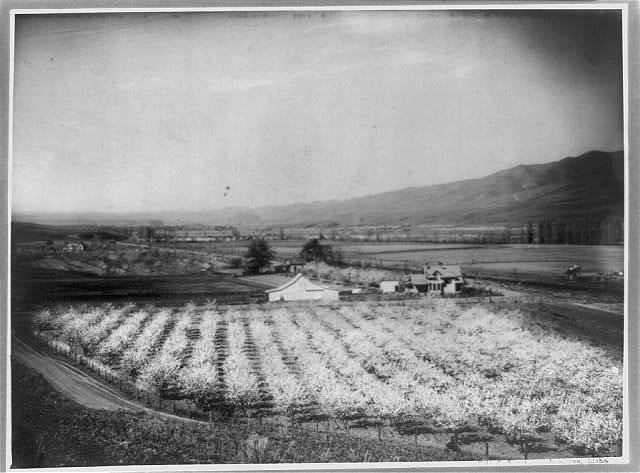 [Bird's-eye view of farmland and mountain, with orchard in foreground, Lewiston valley, Idaho] / Fair & Thompson, Lewiston, Idaho.