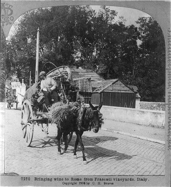 Bringing wine [by mule-drawn cart] to Rome from Frascati vineyards, Italy