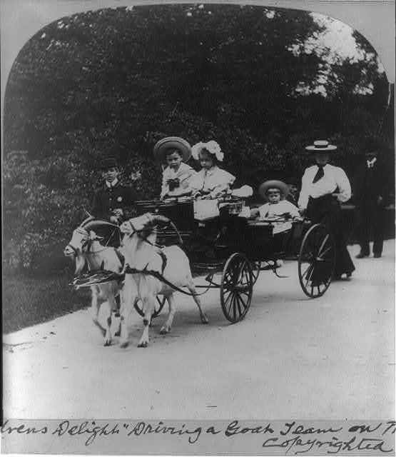 """""""Children's delight"""" driving a goat team on the mall Central Park, New York"""