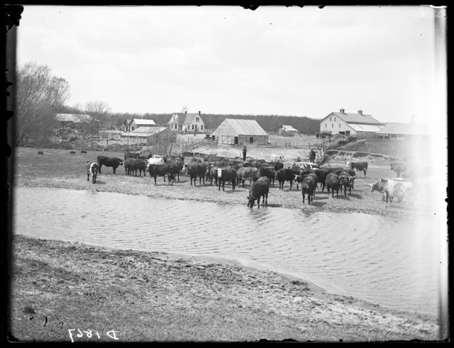 David Christensen farm near New Helena, Custer County, Nebraska.