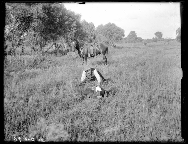"""Farmer 'Corn Tassel' whose cows always raised twin calves"""
