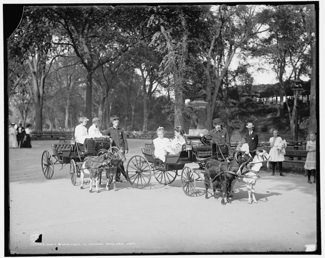Goat carriages in Central Park, New York