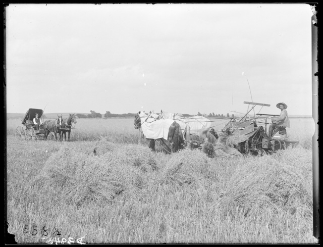 Harvesting oats on the T.A. Taylor farm, Lexington, Nebraska.