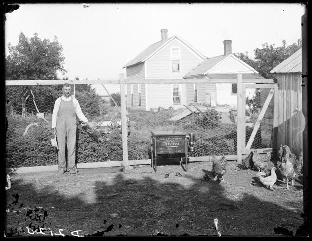 Mr. Sanson with his chickens on his farm one mile north of Kearney, Buffalo County, Nebraska.