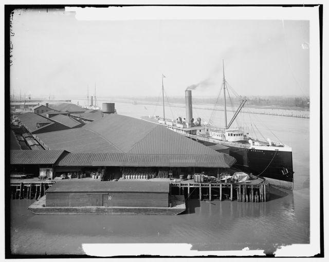 Ocean Steamship Co.'s docks, Savannah, Ga.