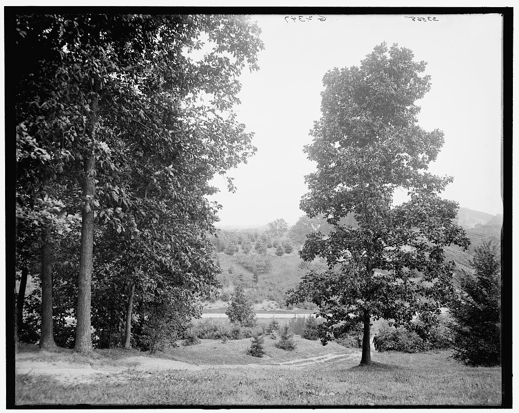 [View in Highland Park, Rochester, N.Y.]