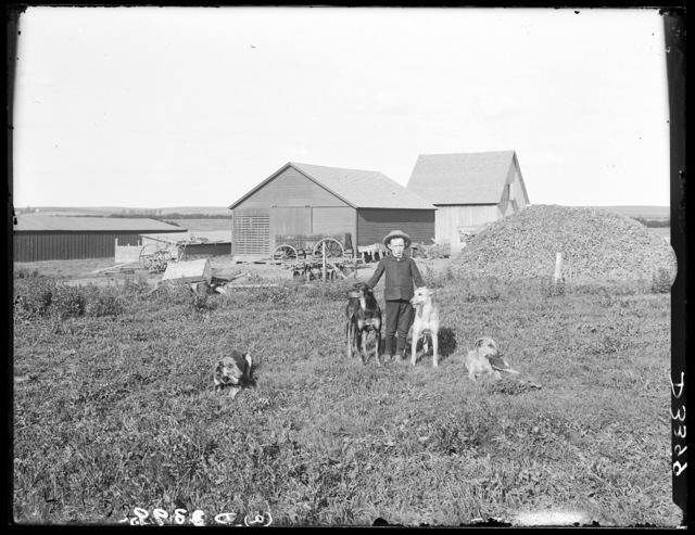 A boy with greyhounds on the John A. Edminstein farm, Lomax, Custer County, Nebraska.
