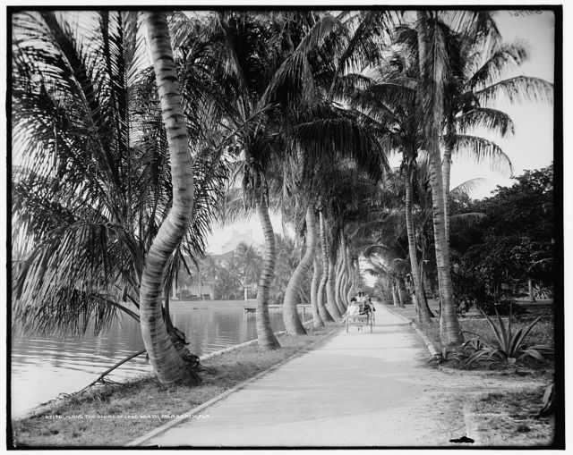Along the shore of Lake Worth, Palm Beach, Fla.