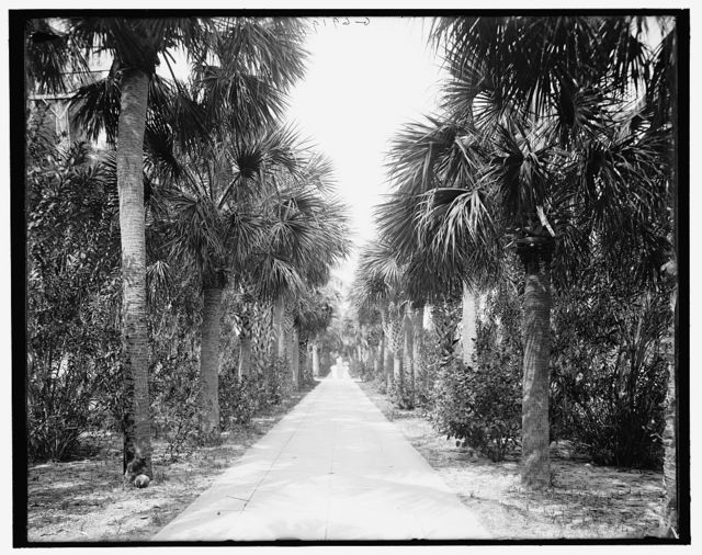 [Avenue of palms between the Royal Poinciana Hotel and the Breakers, Palm Beach, Fla.]