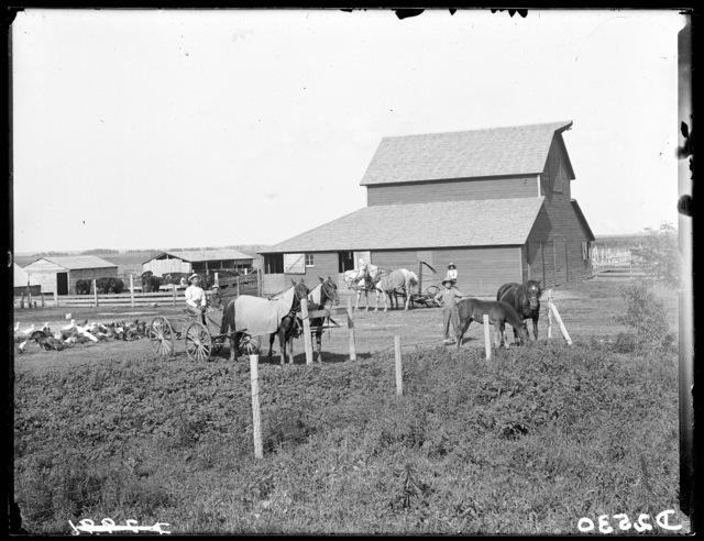 C.A. Hagstrom barn and livestock, Overton,  Dawson County, Nebraska,