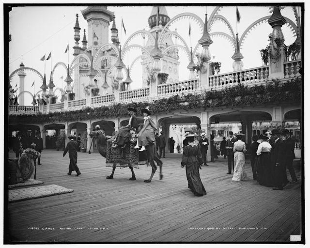 Camel riding, Coney Island, N.Y.