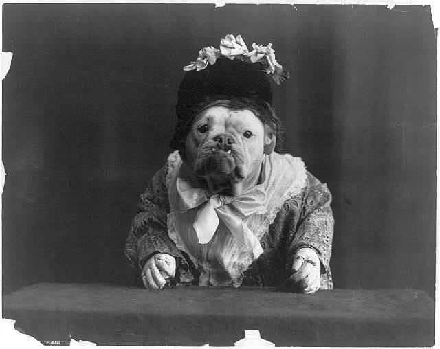 Dog dressed in flower bedecked bonnet and dress