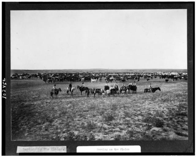 Herding on the Plains / F.M. Steele, Special Photographer, C.R.I. & P. Railway System.