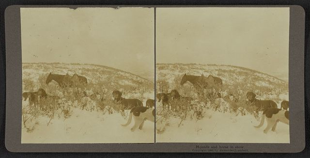 Hounds and horse in snow