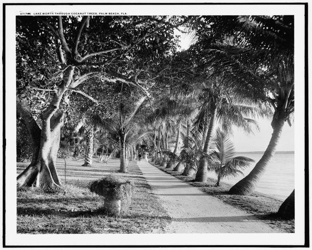 Lake Worth through cocanut [i.e. coconut] trees, Palm Beach, Fla.
