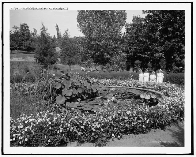Lily pond, Mountain Park, Mt. Tom, Mass.