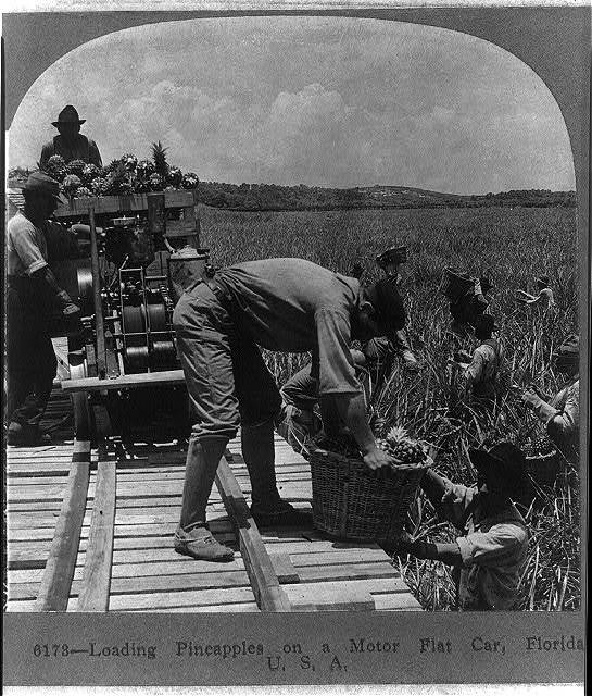 Loading pineapples on a motor flat car, Florida, U.S.A.
