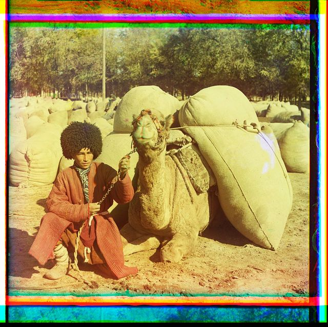 [Man with camel loaded with packs]