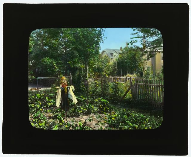 [National Cash Register Company, Dayton, Ohio. Worker vegetable garden]