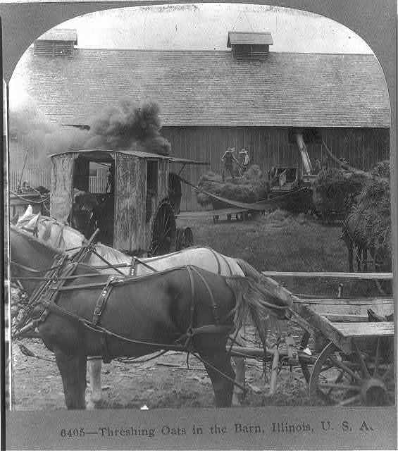 Threshing oats in the barn, Illinois, U.S.A.