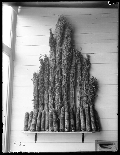 Tied shocks of alfalfa and corn on display