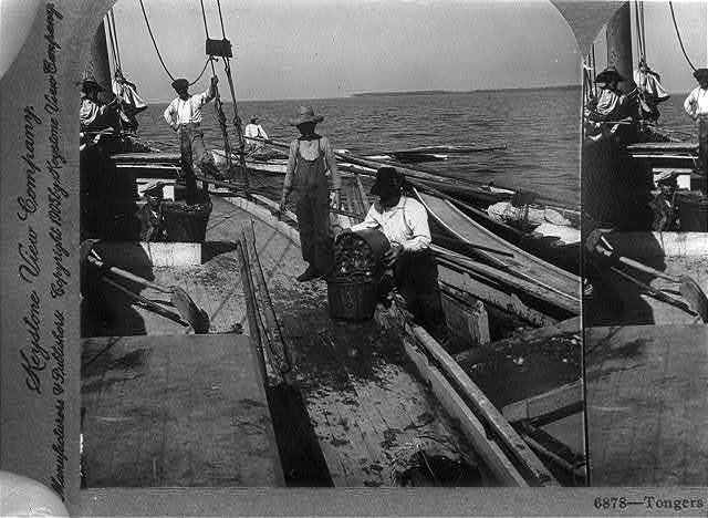 Tongers selling oysters to market boat, Chesapeake Bay, Md., U.S.A.