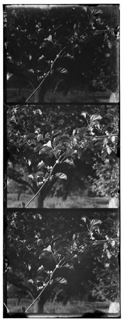 [Tree branch]